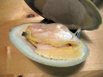 0310 clam.jpg