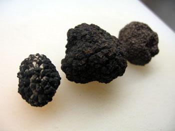 1027 truffes noires.jpg