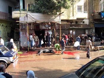 E Cairo vache1.jpg