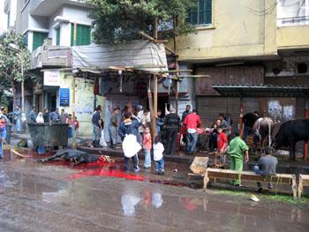 E Cairo vache2.jpg